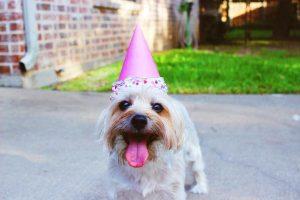 Geluk - happy doggy