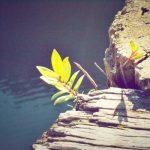 Kies voor groei… of stagneer