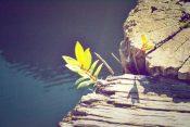 Mentor Momenten april 2020 – Een moeilijke lente