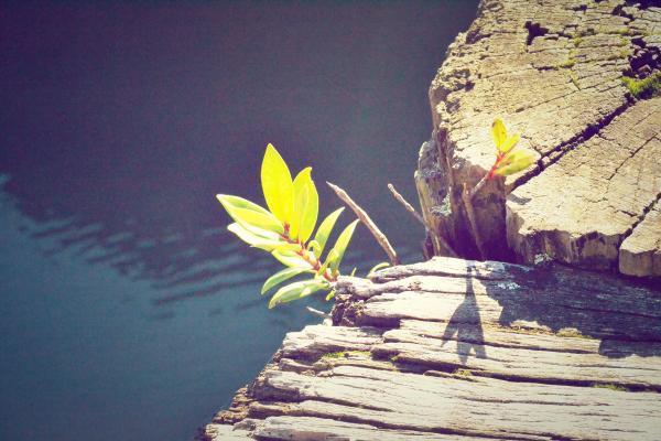 De natuur is onstuitbaar en vernieuwd zichzelf