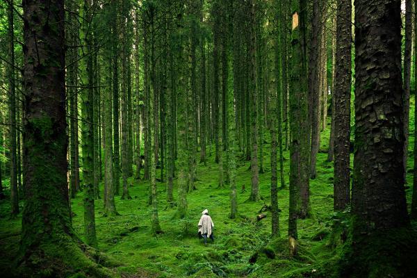 Groei in natuur = Leven!