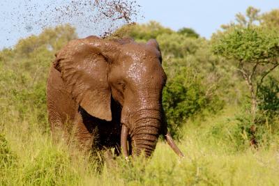 Gevoelens en emoties: het onderbewust als een olifant