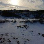 Mentor Momenten februari 2021 - Even ouderwets winter