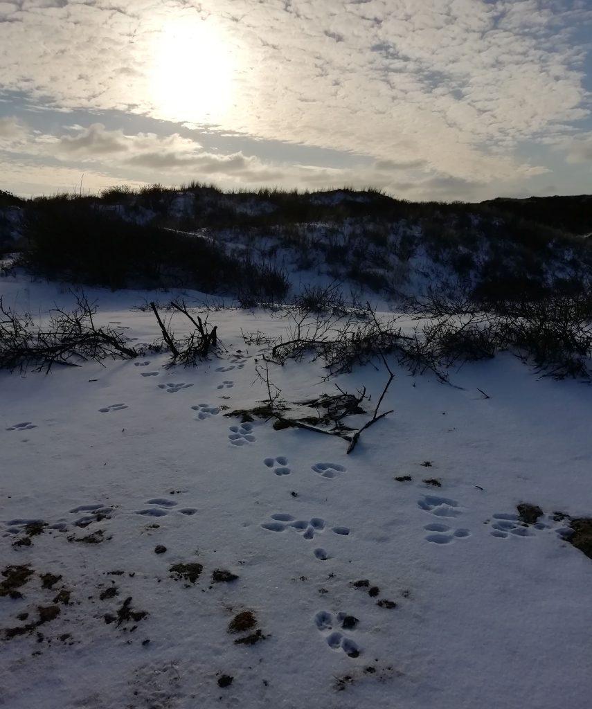Sneeuw februari 2021 - konijnensporen